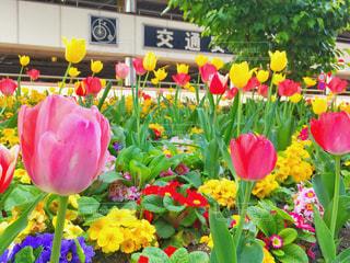 色とりどりの花のグループ - No.1117079