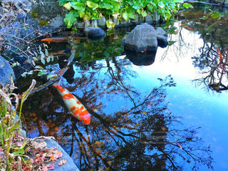 近くに池のアップの写真・画像素材[1124766]