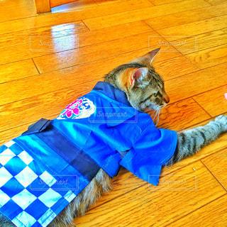 床に横になっている猫の写真・画像素材[1130642]