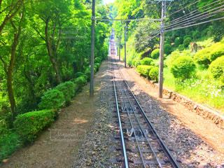 下り列車を走行する列車は森の近く追跡します。の写真・画像素材[1155073]
