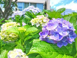 近くの花のアップの写真・画像素材[1222069]