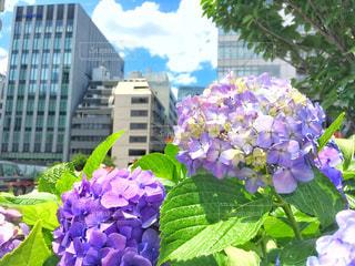 近くの植物に紫の花のアップの写真・画像素材[1222085]