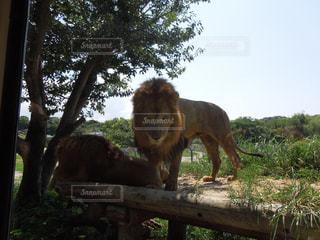 動物園の写真・画像素材[300494]