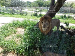 動物園の写真・画像素材[300495]