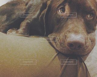 犬の写真・画像素材[256775]