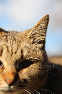 猫の写真・画像素材[252722]
