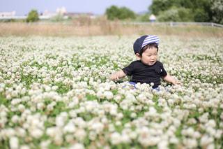 春の原っぱでの写真・画像素材[536906]
