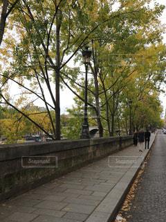 秋のパリの写真・画像素材[805881]