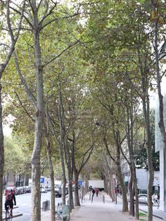 秋のパリの写真・画像素材[805889]