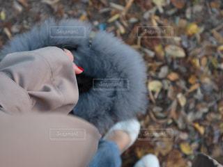 秋のパリの写真・画像素材[805915]