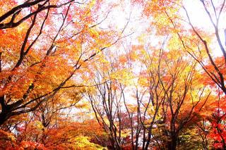 秋の写真・画像素材[254733]
