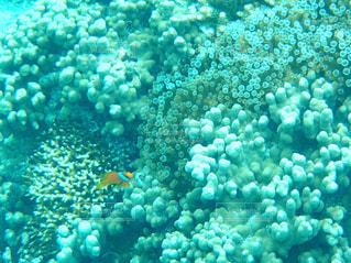 サンゴの水中ビューの写真・画像素材[1173369]
