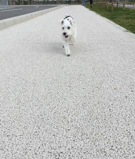 犬 - No.253379