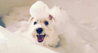 犬の写真・画像素材[254685]