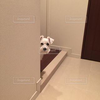 犬の写真・画像素材[275774]