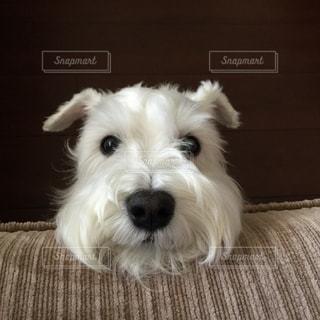 犬の写真・画像素材[330391]