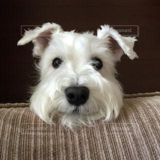 犬の写真・画像素材[330392]