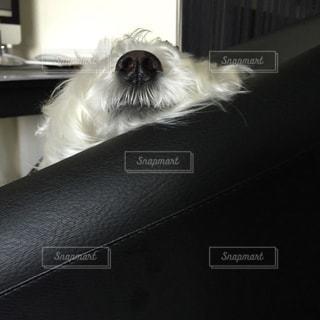 犬の写真・画像素材[330393]
