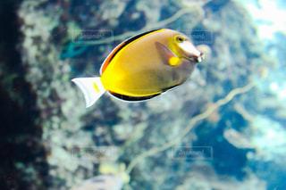熱帯魚 - No.872934
