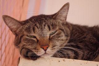 猫の写真・画像素材[253141]