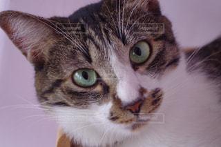 猫の写真・画像素材[253146]