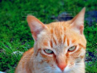 猫の写真・画像素材[1587527]