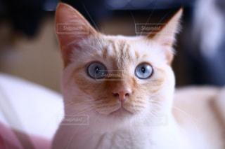 猫の写真・画像素材[253362]