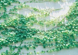 葉の写真・画像素材[6261]