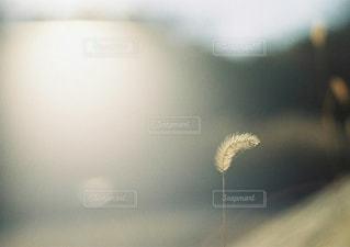風景の写真・画像素材[6227]