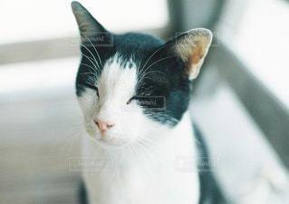 猫の写真・画像素材[6218]