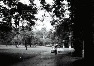 風景の写真・画像素材[6177]