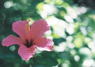 自然の写真・画像素材[6166]