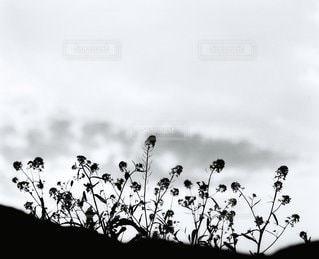 自然の写真・画像素材[6153]