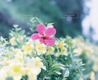 自然の写真・画像素材[6151]