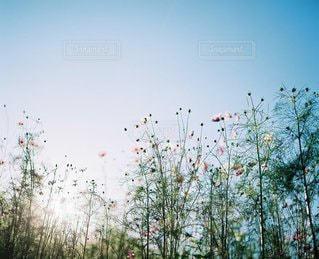 自然の写真・画像素材[6131]