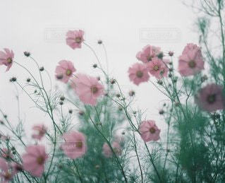 自然の写真・画像素材[6128]