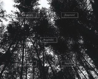 自然の写真・画像素材[6118]