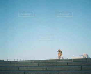 犬の写真・画像素材[6082]