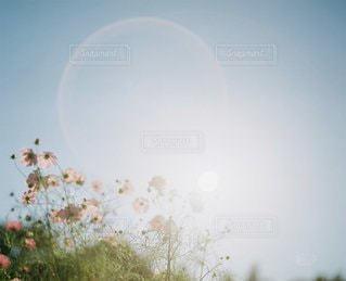 自然の写真・画像素材[6078]