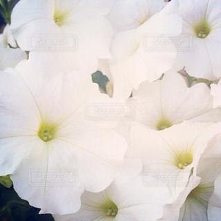 自然の写真・画像素材[254020]