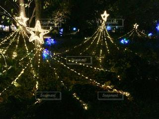 夜にライトアップされた樹木の写真・画像素材[2737888]
