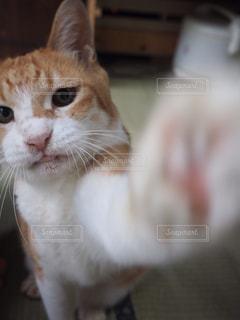 猫の写真・画像素材[254784]