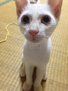 猫の写真・画像素材[255269]