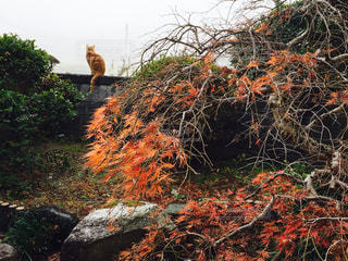 猫の写真・画像素材[260545]