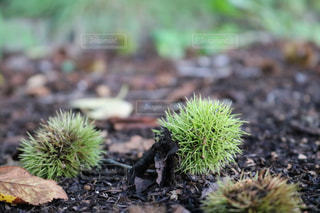 自然の写真・画像素材[253806]