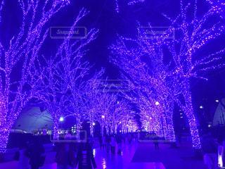 東京の写真・画像素材[307925]