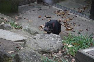 動物の写真・画像素材[380545]