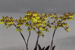 花の写真・画像素材[380550]