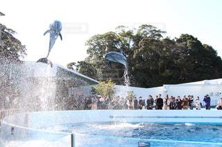 イルカの写真・画像素材[380587]