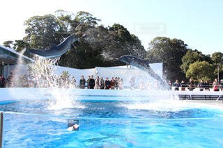 イルカの写真・画像素材[380589]